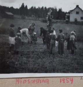 midsommar-1954